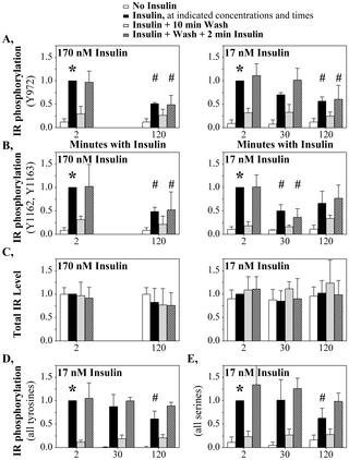 Hyperinsulinemia And Insulin Resistance