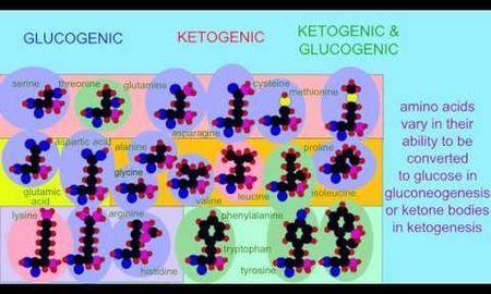Amino Acids And Ketosis