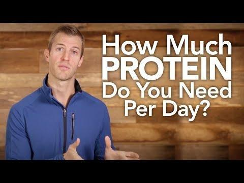 Is Excess Protein Converted To Glucose?