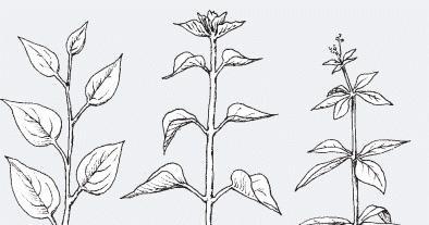 Plant Life: Leaf Arrangements