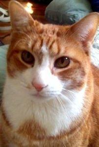 Cat Diabetes: Symptoms, Diagnosis, And Treatment
