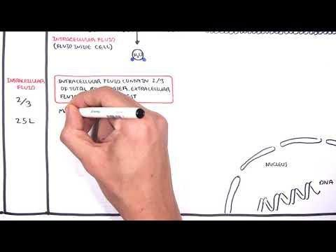 Fluid, Electrolyte & Acid-base Balance Practice Qs