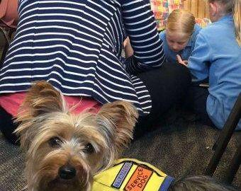 Assistance dog Molly trained to detect when twins' glucose levels become unstable during class