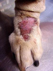 List Of Dog Diseases