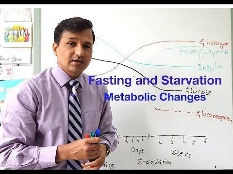 Food Intake And Starvation Induce Metabolic Changes