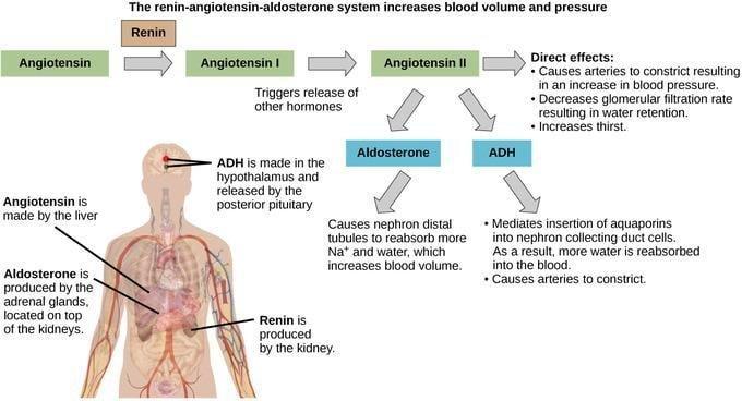 Regulation Of Body Processes
