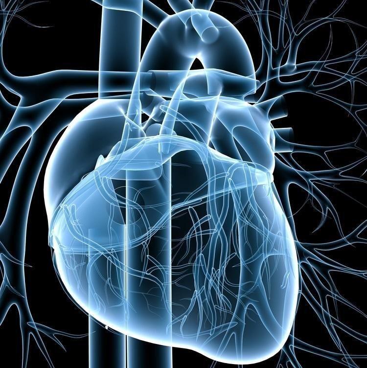 How Does Diabetes Drug Metformin Work?