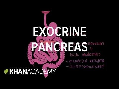 Exocrine Function Of Pancreas