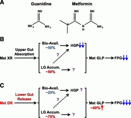 Mechanism Of Metformin: A Tale Of Two Sites