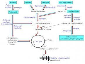 Activity Of Which Of The Following Pathways Is Increased As A Result Of Increased Insulin?