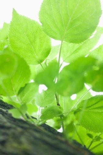 How Do Plants Produce Glucose?