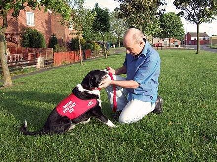 How Does A Diabetic Alert Dog Work?