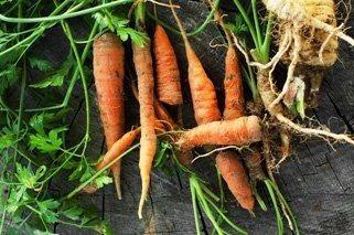 Do Carrots Make Your Blood Sugar Go Up?