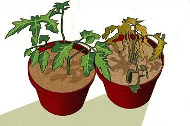 What Is Glucose Stored As In Plants?