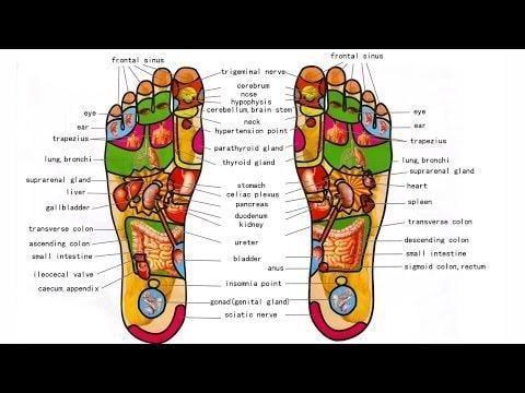 Foot Reflexology Treatment And Free Foot Chart