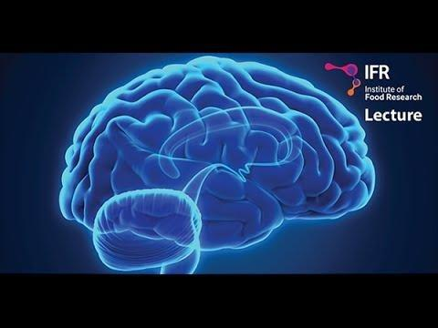 How Does Gut Bacteria Influence The Brain?