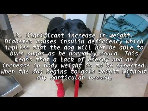 What Are The Symptoms Of Diabetes Insipidus In Dogs?