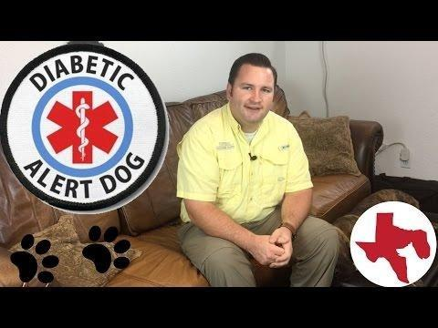 How Are Diabetes Dogs Trained