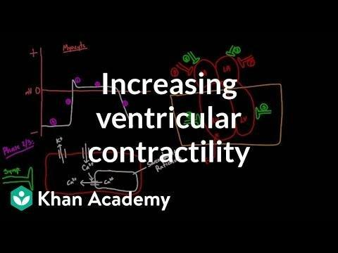 Acidosis And Contractility