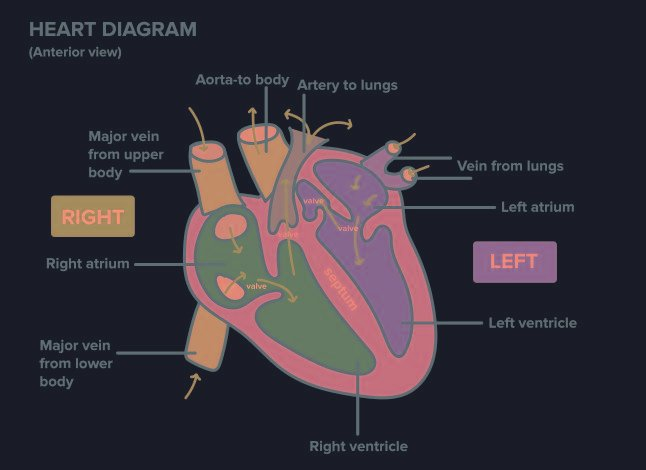 How Can Diabetes Affect The Cardiovascular System