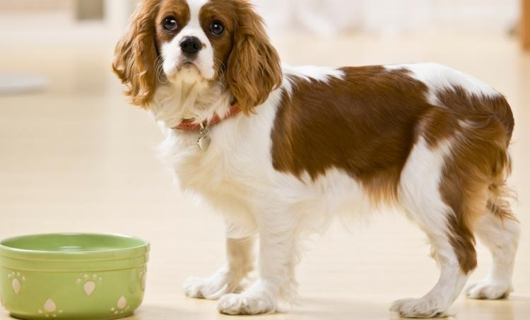 Nutrition In Diabetic Pets