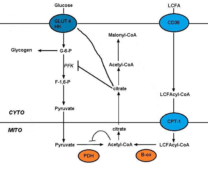 Randle Cycle - Wikipedia