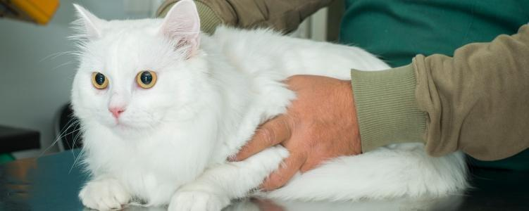 Signs Of Too Much Insulin In Cats