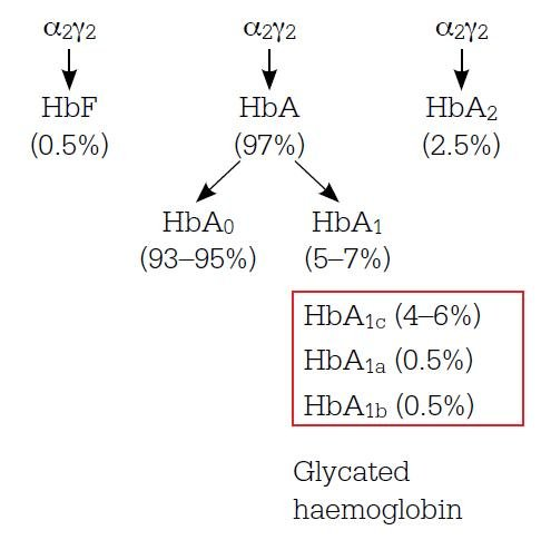 Hba1c And Monitoring Glycaemia