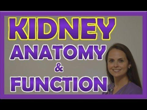 How Is The Excretory System Affected By Diabetes?