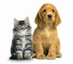 Diabetes And Pet Food