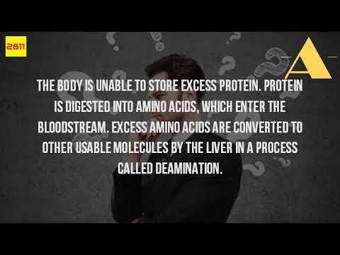Amino Acids Can Be Used By The Body To Make Glucose And Fatty Acids True Or False
