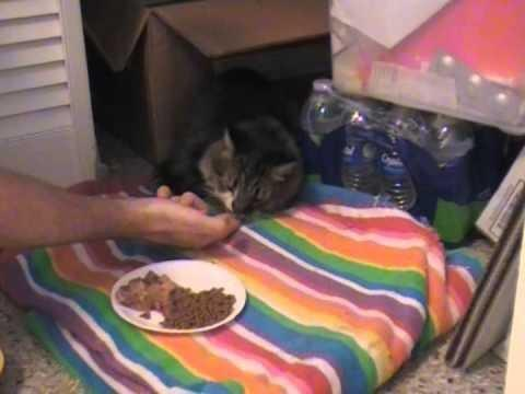 Diabetic Cat Wants To Eat All The Time
