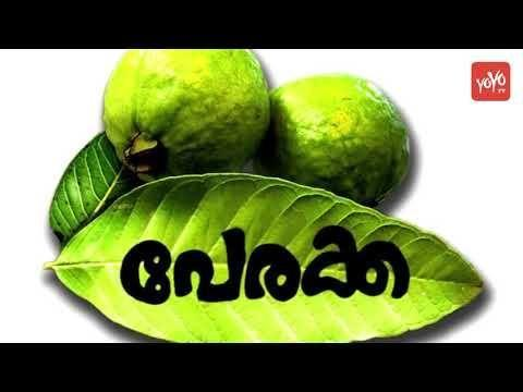 Guava Leaves For Diabetes