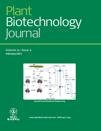 Metabolic Engineering Of Sugars And Simple Sugar Derivatives In Plants