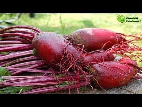 Can Nutrients In Beets Help With Type 2 Diabetes?
