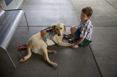 Pet Talk: Diabetic Alert Service Dogs Can Add Years To 9-year-old's Life