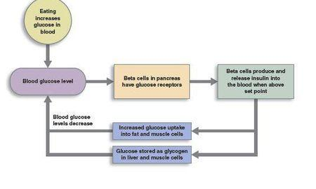 How Diabetes Occurs In Human