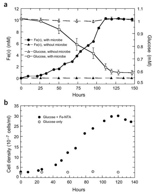 Electricity Generation By Direct Oxidation Of Glucose In Mediatorless Microbial Fuel Cells