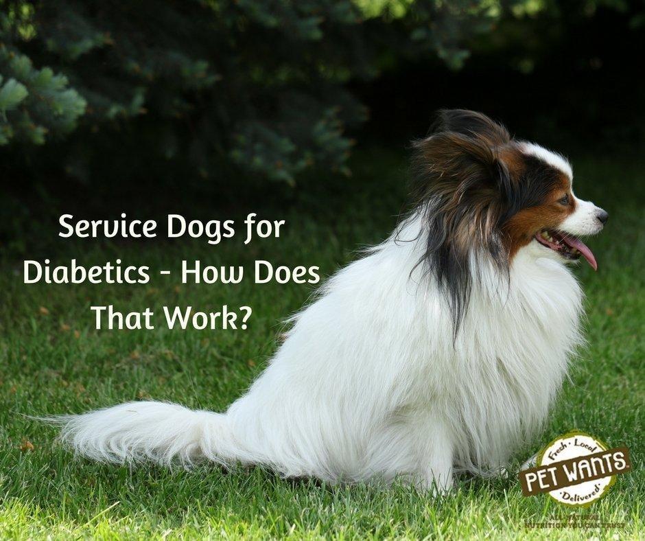 Service Dogs For Diabetics