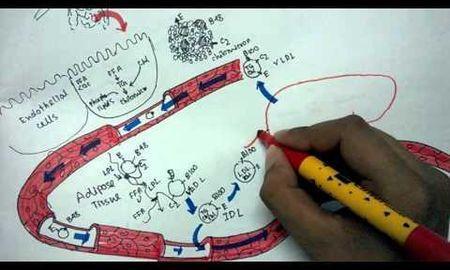 Abnormal Lipid Metabolism In Diabetes