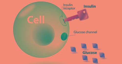 What Is The Relationship Between Insulin And Glucose