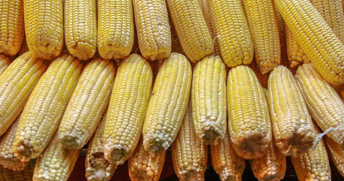 The Relationship Between Corn Starch And Glucose