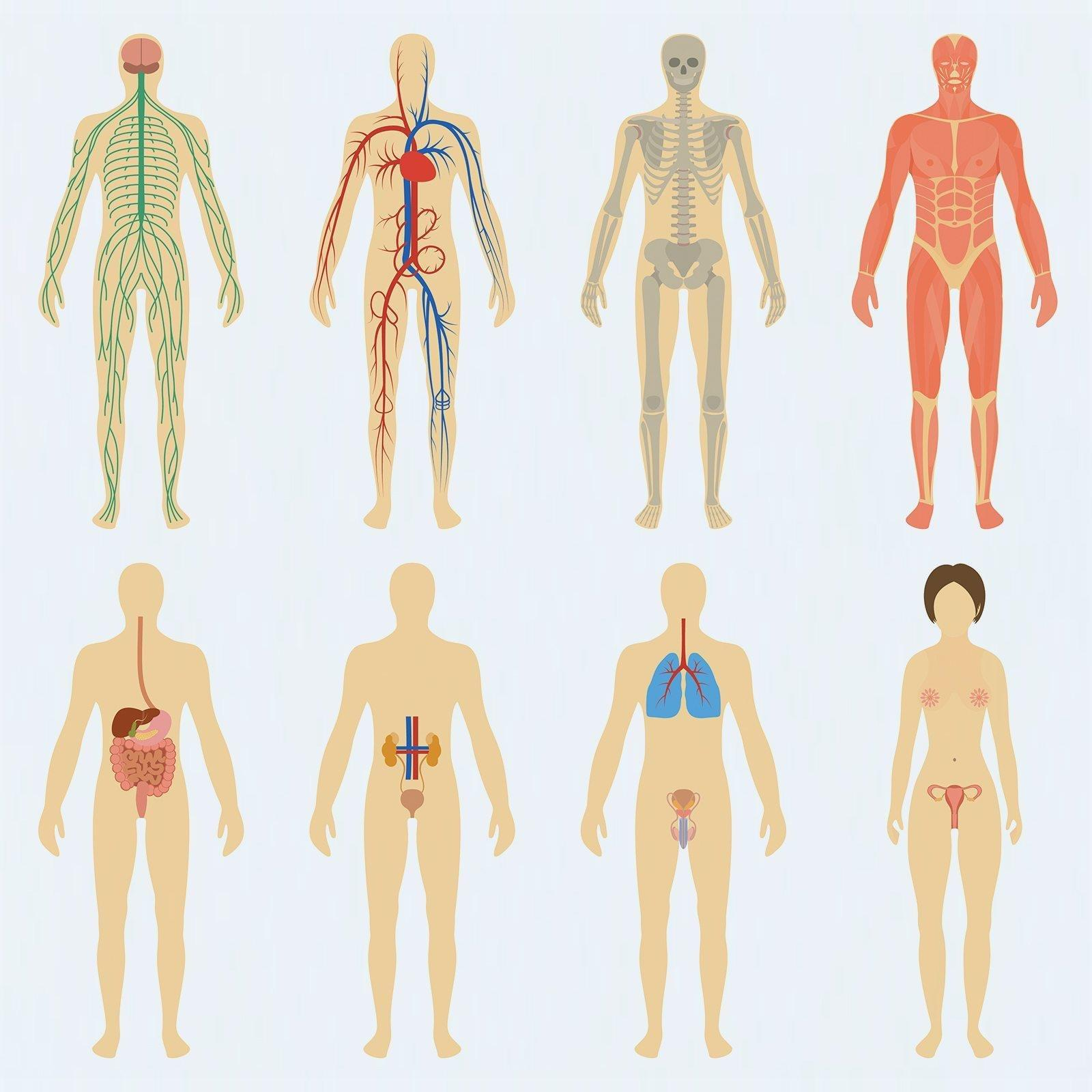 What Body Tissues And Organs Are Affected By Diabetes?