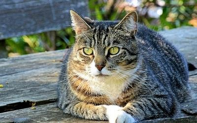 Can A Cat's Diabetes Go Into Remission?
