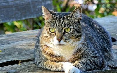 Symptoms That Feline Diabetes Is In Remission