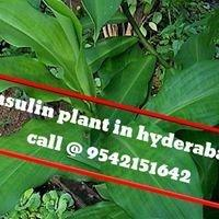 Insulin Plant In Hyderabad Medical Company