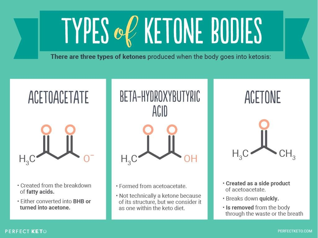 What Are Ketone Bodies And When Are They Produced?
