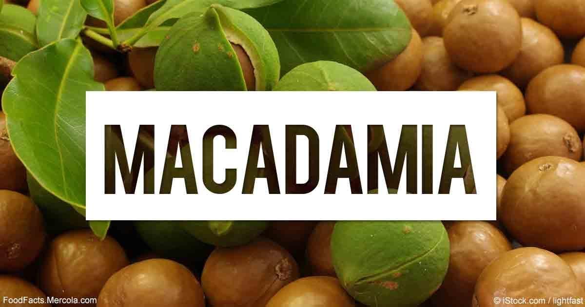 Macadamia Nuts Diabetes