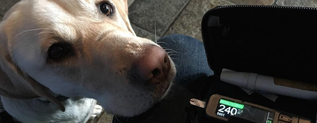 How Does A Service Dog Help Someone With Diabetes?
