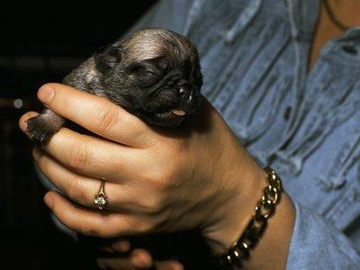 Recipe For Newborn Puppies With Karo Syrup